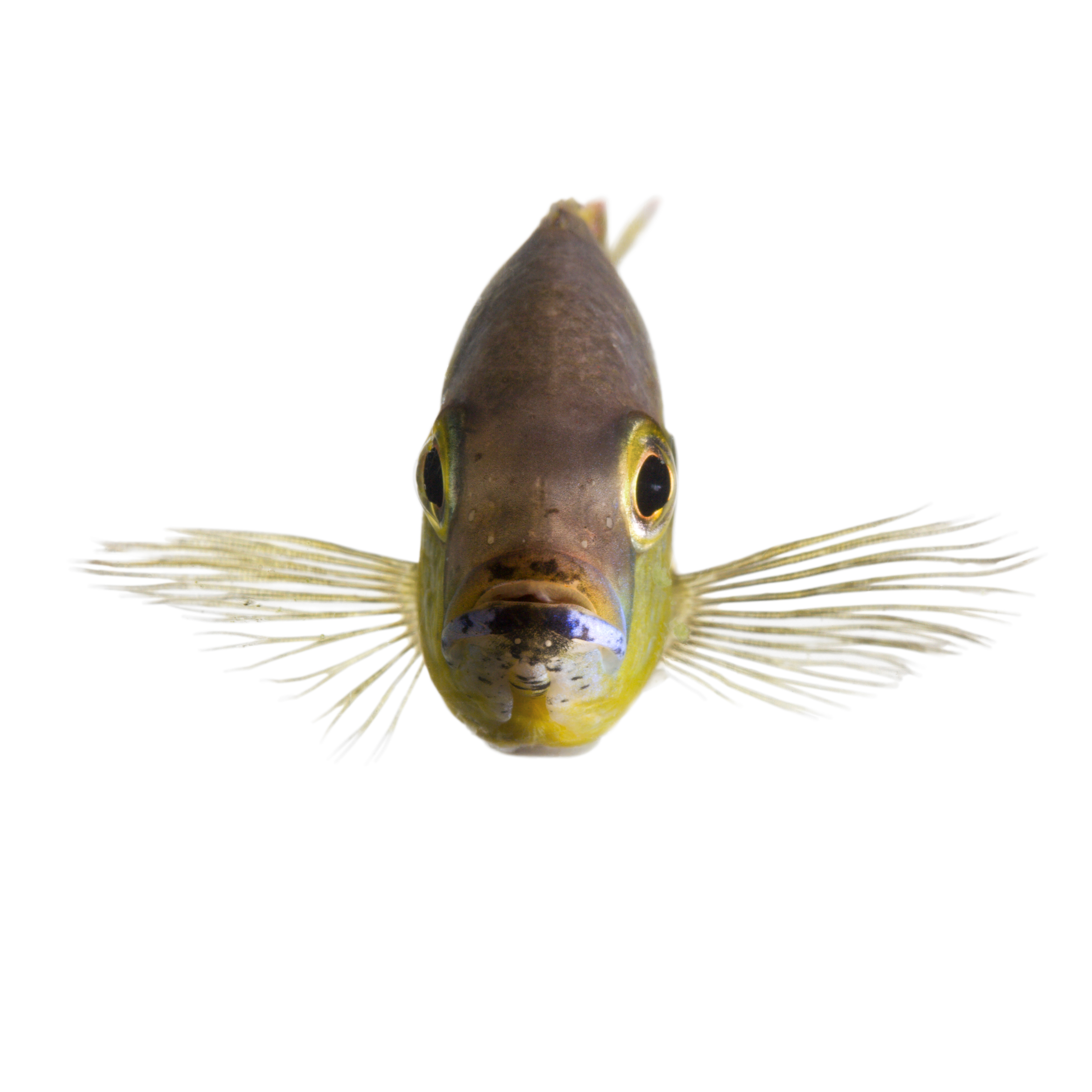 NationalGeographic_1130317 fish.png