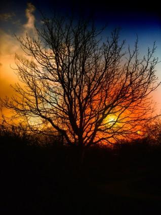 tree_sunset_beautiful_215771.jpg