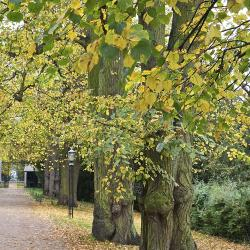 Read more at: Natural Cambridgeshire: Community grants to support local nature-based projects
