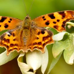 Read more at: CRI and Cambridge Zero Research Symposium on Nature and Biodiversity