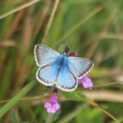 Read more at: Banking on Butterflies