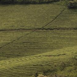 Read more at: What's the Best Way of Farming for Nature?