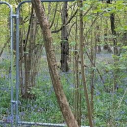 Read more at: HS2: Rail Line Over Ancient Woodland